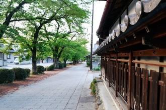 城下町の桜並木通り